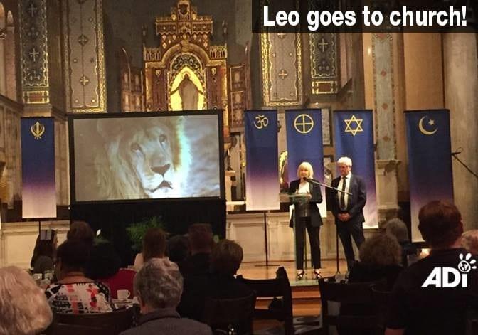 Animal Defenders International Lion Rescue