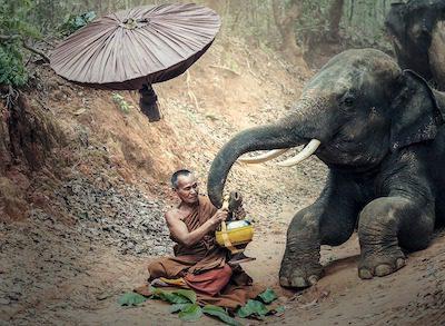 buddhism and nature
