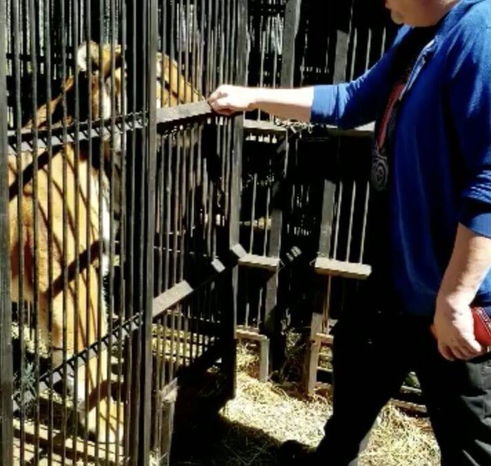 Howard and Itza the Tiger